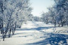 Eine schöne weiße Landschaft eines Tages des verschneiten Winters mit Abdrücken Lizenzfreies Stockfoto