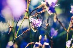 Eine schöne Zeit auf dem Morgen mit Blumenfeld Lizenzfreie Stockfotografie