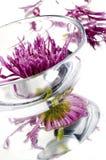 Eine Schüssel mit purpurroter Blume stockfoto