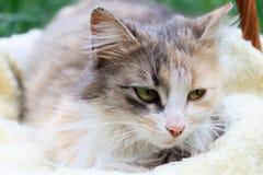 Eine sch?ne bunte Katze, die in einem Korb liegt stockfotos