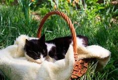 Eine sch?ne wei?-schwarze Katze, die in einem Korb liegt stockbilder