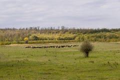 Eine Schafherde auf einer schönen Bergwiese stockfoto
