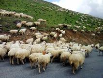 Eine Schafherde, welche die Straße in den Bergen führt Stockbilder