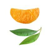 Eine Scheibe der saftigen reifen Mandarine Stockbilder