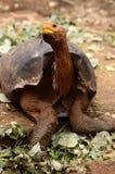Eine Schildkröte Stockbild