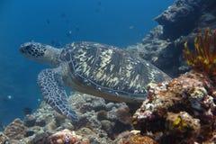 Eine Schildkröte Lizenzfreie Stockfotos