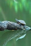 Eine Schildkröte auf einem Klotz Stockfotos