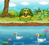Eine Schildkröte neben dem Fluss mit Enten Lizenzfreie Stockfotos
