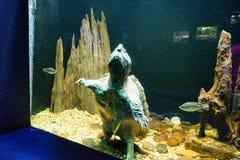 Eine Schildkröte steht stockbilder
