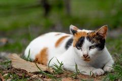Eine schläfrige drei-farbige Katze liegt allein im Hinterhof lizenzfreie stockfotos