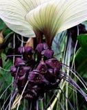 Eine Schläger ähnliche Blume, wie schön sie schaut stockbilder