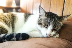 Eine Schlafenkatze mit einem Auge offen Stockbild