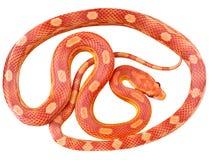 Eine Schlange stockbild