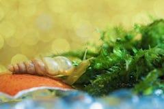 Eine Schnecke isst Moos Stockfotografie