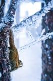 Eine schneebedeckte Ansicht xiling Schnee muntain stockfotos