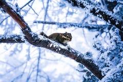Eine schneebedeckte Ansicht xiling Schnee muntain stockfotografie