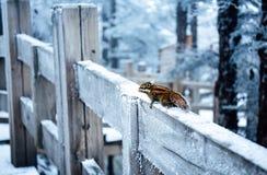Eine schneebedeckte Ansicht xiling Schnee muntain lizenzfreie stockfotos
