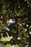 Eine Schnur von den Goldperlen, die in einem Baum baumeln Lizenzfreies Stockbild