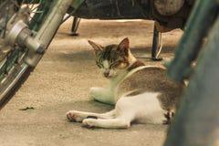 Eine schwangere weibliche Katze steht unter einem Motorrad still lizenzfreie stockbilder
