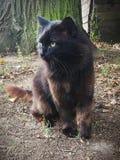 Eine schwarze Katze stockbild