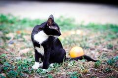 Eine schwarze Katze Stockfotos