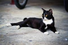 Eine schwarze Katze Stockfotografie