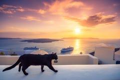 Eine schwarze Katze auf einer Leiste bei Sonnenuntergang an Fira-Stadt, mit Ansicht des Kessels, des Vulkans und der Kreuzschiffe lizenzfreies stockbild