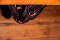 Eine schwarze Katze, die heraus von unterhalb eines gelben Betts späht Lizenzfreie Stockfotos