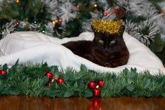 Eine schwarze Katze, die eine Krone des goldenen Weihnachtslamettas trägt stockfoto
