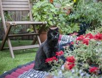 Eine schwarze Katze im Garten Stockbild