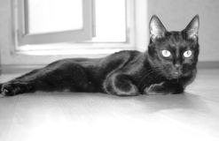 Eine schwarze Katze liegt in einem leeren Raum Russische Traditionen stockfotografie