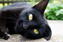 Eine schwarze Katze starrt mit gelben Augen an Stockfotos