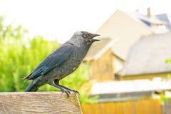 Eine schwarze Krähe, die auf einer Bank in der Stadt sitzt stockbild