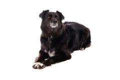Eine schwarzer Hundeniederlegung Stockfotos