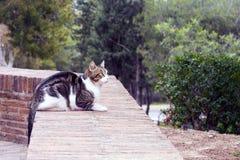 Eine Schwarzweiss-Katze, die in der Festung von Gibralfaro lebt, Màlaga, wird vor dem hintergrund der Koniferenbäume fotografiert lizenzfreie stockfotos