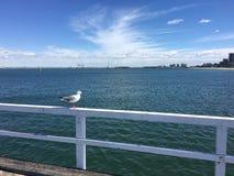 Eine Seemöwe auf dem Pier Stockbild