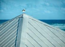 Eine Seemöwe auf Tin Roof Looking Out zum Meer Lizenzfreie Stockbilder