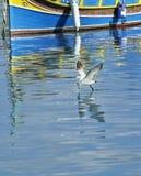 Eine Seemöwe im bunten maltesischen Fischerboothintergrund, Malta Lizenzfreie Stockfotografie