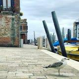 Eine Seemöwe in Venedig Lizenzfreie Stockbilder