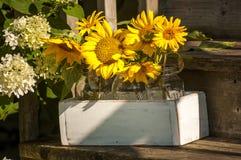 Eine sehr Landsonnenblumenanzeige stockfotografie