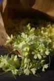 Eine sehr nahe Ansicht über ausgewählte gelbe Blumen Lizenzfreies Stockbild