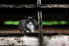 Eine sitzende Aufwartung der Katze auf das alte hölzerne Lizenzfreies Stockbild