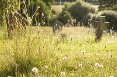 Eine Sommerfriedhofswiese, die künstlerisch mit wilden Blumen und Löwenzahn verwischt wurde, hob durch die Abendsonne hervor lizenzfreies stockfoto