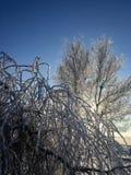 Eine Sonne, die durch die Niederlassungen des Baums scheint Stockfoto