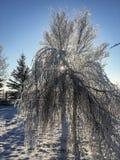 Eine Sonne, die durch die Niederlassungen des Baums scheint Lizenzfreie Stockbilder