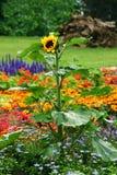 Blumenbeet Stockfotografie