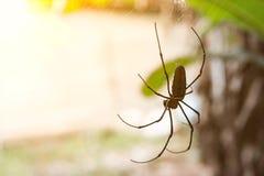 Eine Spinne Lizenzfreie Stockfotografie