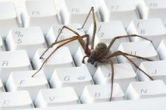 Eine Spinne auf weißer Computertastatur Stockbild