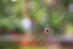 Eine Spinne, die eine Fliege isst Stockbilder