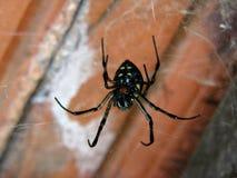 Eine Spinne in ihrem Web stockfoto